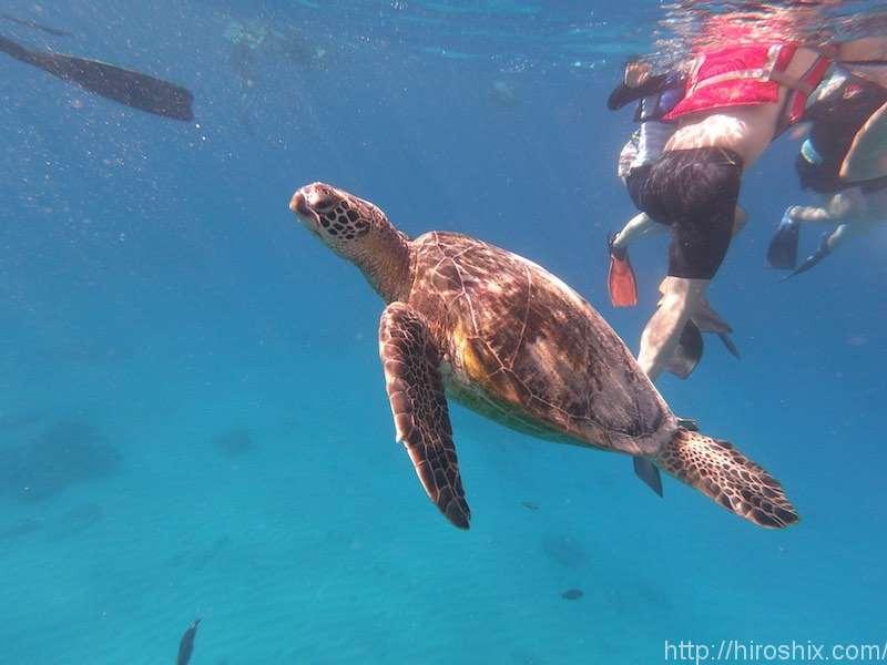 ハワイでウミガメと一緒にシュノーケリング&セーリング ホロカイ・カタマラン号【オアフ島・ホノルル】