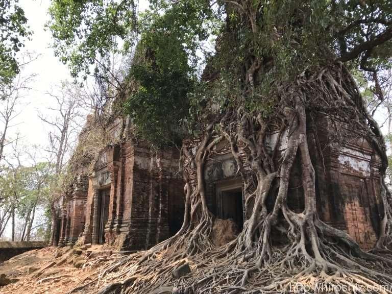 コーケー&ベンメリア遺跡へ!シェムリアップから観光ツアー【カンボジア旅行2018】